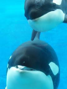 139 - Orcas.JPG