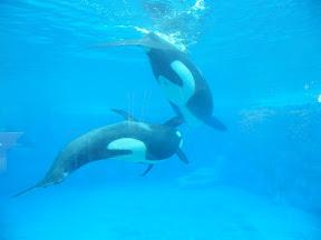 141 - Orcas.JPG
