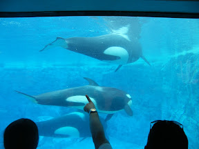 145 - Orcas.JPG