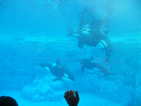 146 - Orcas.JPG
