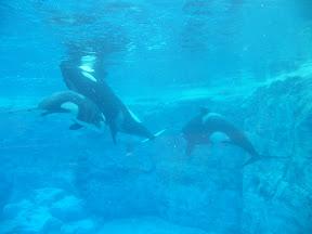 151 - Orcas.JPG
