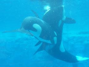 153 - Orcas.JPG