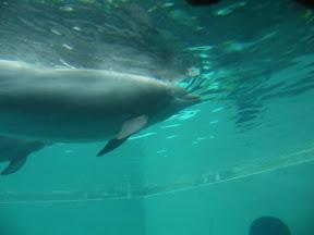 277 - Delfines.JPG