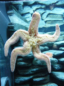 295 - Estrella de mar.JPG