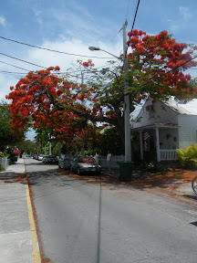 537 - Key West.JPG