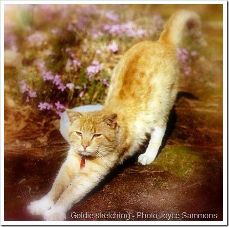 goldie stretching-1