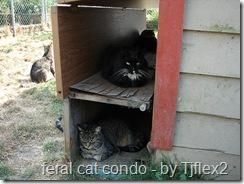 feral cat housing