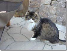 big foot cat