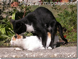 cats mating