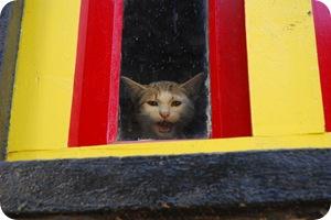 Cat Sounds WAV WMA MP3 | PoC
