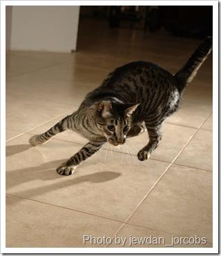 cat-photo-technique-1