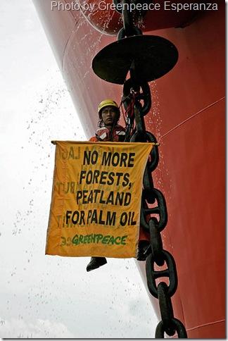 palm oil deforestation greenpeace