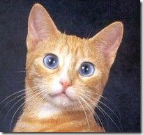 Cat Eye Color - PoC