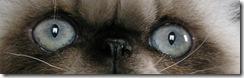 Aqua-blue cat eyes