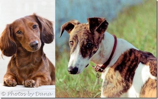 Collage Dana Wimpfheimer dog photos