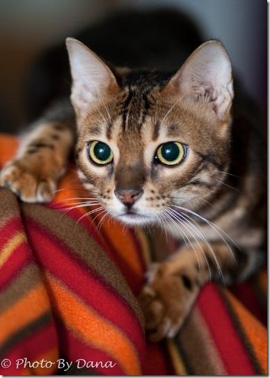 Dana Wimpfheimer cat photo