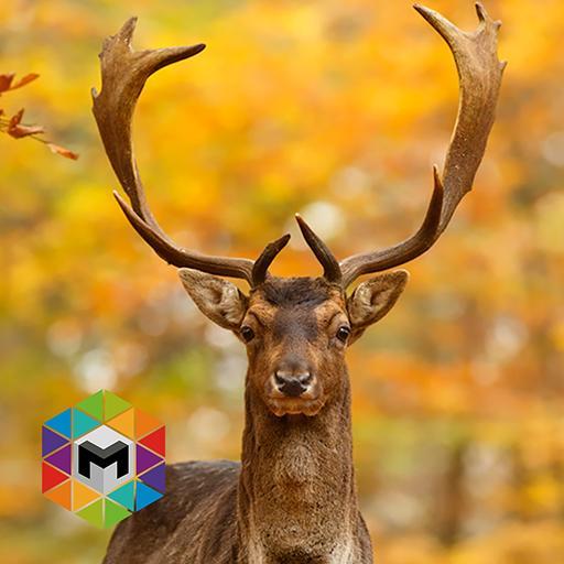 Deer Simulator LOGO-APP點子