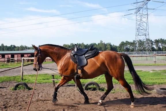 Drukuj stronę Zdjęcia Naszych Koni II (rok 2009)