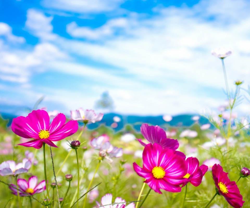 3D Flower - screenshot