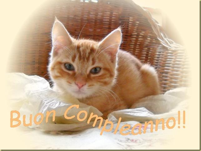 57 Best Immagini Auguri Di Buon Compleanno Con Gatti