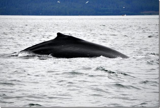 July 2010 Alaska 223