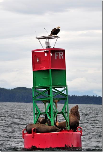 eagle and seals