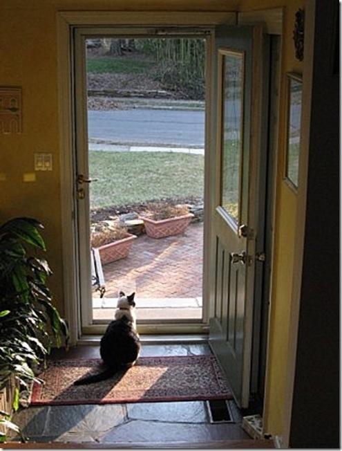 Rocky door