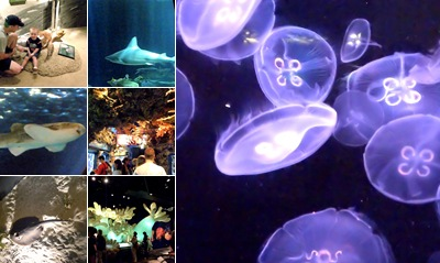 View Shedd Aquarium ~ Oceanarium and Wild Reef