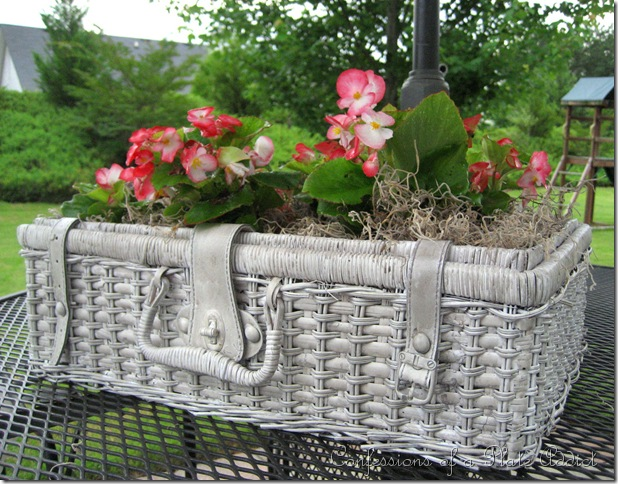 CONFESSIONS OF A PLATE ADDICT Shabby Picnic Basket Planter