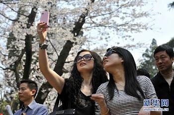 二十万赏樱客引爆武汉樱花游