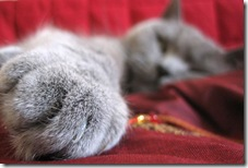 cats-paw