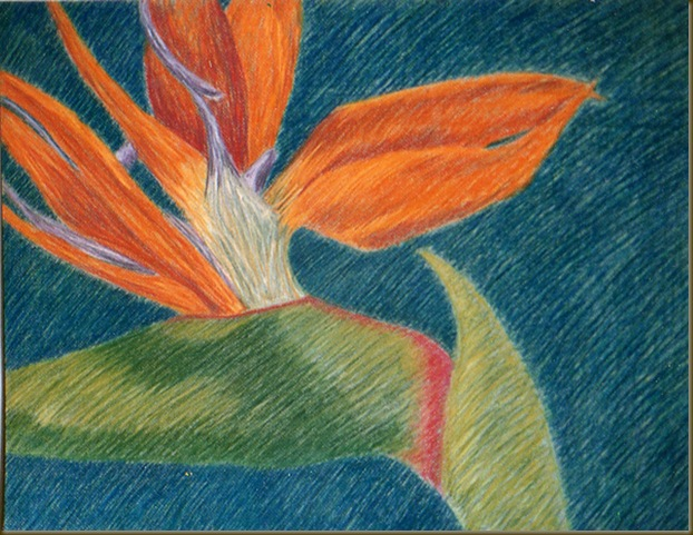 bird of paradise drawing one