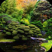Koi Zen Garden Live Wallpaper