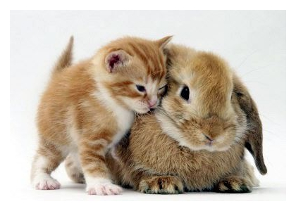 Cute Kittens And Bunnies