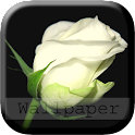 Beautiful Live Wallpapers icon