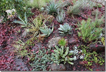 101218_driveway-succulent-bed-after
