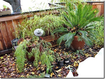 110101_fy-area-for-succulent-display