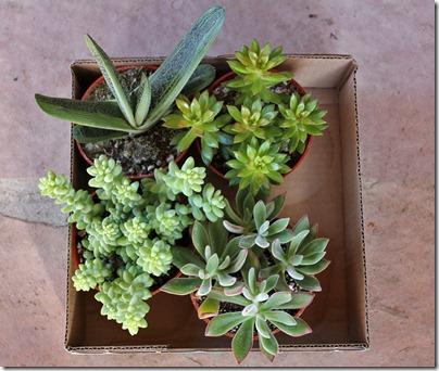 succulents and more ikea succulents. Black Bedroom Furniture Sets. Home Design Ideas