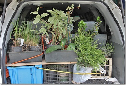 110423_plants_in_car
