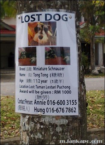 LOST DOG : RM 1000 AWARD