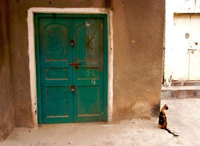 zanzibar green door with cat