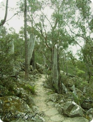 Mt. Wellington Track #7