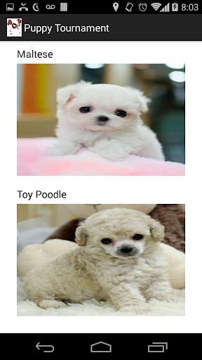 Puppy Tournament