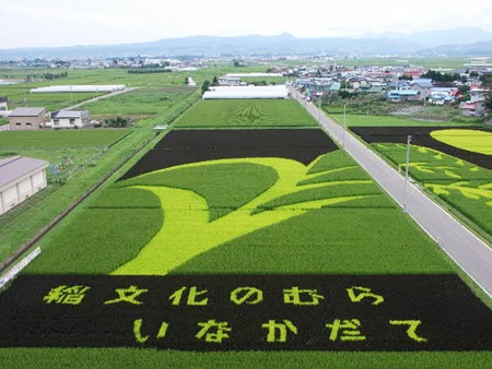 rice-paddy-art (29)