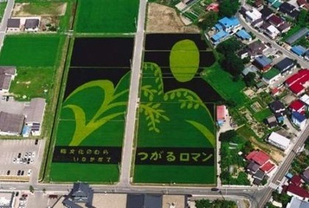 rice-paddy-art (10)