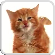 Free Download CAT LICKS LIVE WALLPAPER FREE APK for Samsung