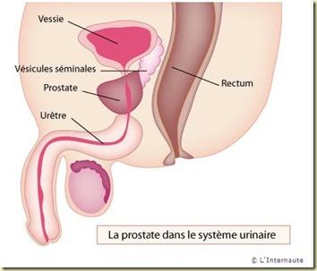 la prostate L'Internaute