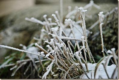 frozen-grass-straws