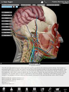 Human Anatomy Atlas Org.