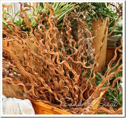sapia wood